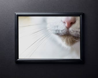 Cat Print, Kitty print, Cat Photo, Cat Whiskers, Cat nose, Color Photo Art, Digital Download, Printable Wall Art, Digital Print, Wall Art