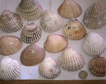 4 c) ocean shells, grass, clam shell