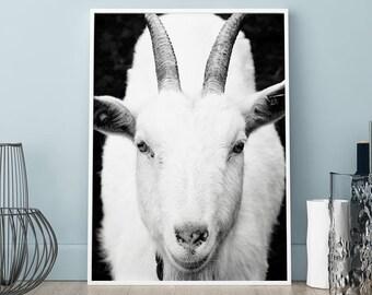 Goat poster,Goat print, Wall art, Art Print, Scandinavian print, Scandinavian poster, animal print, black and white print