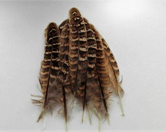 set of 10 feathers natural 10-15cm