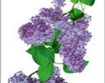 WINDOW PANES ELECTROSTATIC STICKERS * FLOWERS LILAC * 1 BOARD