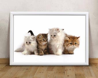 kittens print super sweet animals printable art print wall art print modern printable art modern poster