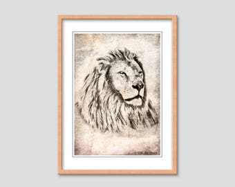 Animal collection - lion