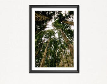 Secret wood-Poster image-Art print-wald-forrest-wood-tree-green-Christmas tree-nature-tree-fir-Christmas tree
