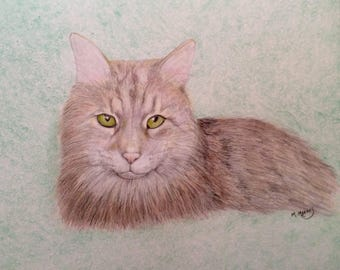 Will draw your pet in colored pencil