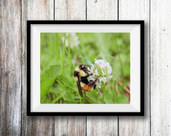 Nature Photography, Digital Wall Art, Macro Photo, Bee and Clover, Digital Download, Printable Wall Art, Home Decor, Wall Decor,mother's day