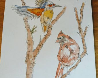 Two beautiful striking colourful  birds sat on a branch after flight A3