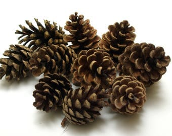 Pine cones 10 pcs, christmas wreath cones, dry natural cones, floristic decoration, wedding decoration, small cones, rustic craft cones #1