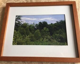 Framed Forest Scene Print