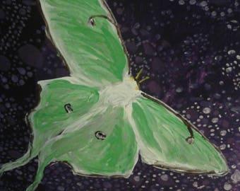 Moonlight moths