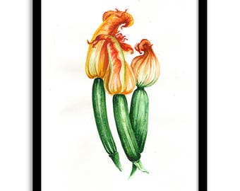 Watercolor original zucchini drawing picture zucchini flowers