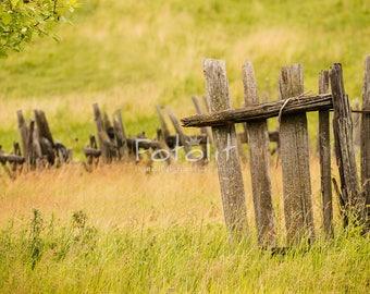 Summer digital background, summer backdrop, field background, nature photography, grass backdrop, fence background, spring, village