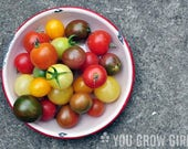 Tomato Lovers Surprise Seed Set -- Container Varieties