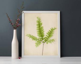 Botanical Print, Fern Art, Nature Wall Art, Woodland Decor, Modern Rustic Decor, Wall Art Print, Bedroom Art, Living Room Decor, Bedroom Art