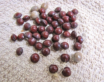 Natural Seed Pod Beads, Natural Seed Beads, Vintage natural beads, Drilled Seed Pods, Crafting, Jewelry, Boho, Estate, Old,