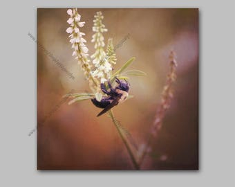 Big Bee on White Flower Warm Nature Photo Wrapped Canvas Wall Art, Square Format