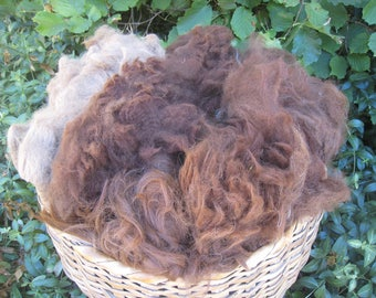 BARGAIN ALPACA 2-Pounds Mixed Browns Nice Fiber Quality Not-Washed Not-Picked Dust and Hay Present My Studio Sale My Farm Fibers Raw Alpaca