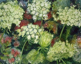 Queen Ann's Lace Study I an original watercolor