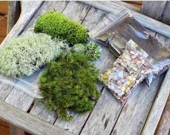 Save25% Terrarium kit-Live moss-Small DIY kit -Woodland Forest Fun-Mood moss-Pillow Moss-Reindeer Moss-Fruiticose lichen mound