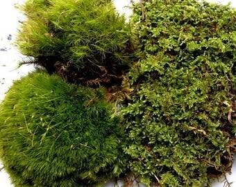 Save25% Mood Moss and  Fern Moss-Sandwich Bag-Great for terrariums and Vivariums-Sheet Moss