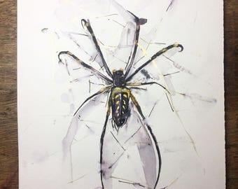 Golden Orb Spider Print