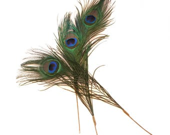 3 Peacock Feathers - 2 Count - for Appliques, Headbands, Bouquets, Fascinators, Hats, Earrings, Scrapbooking