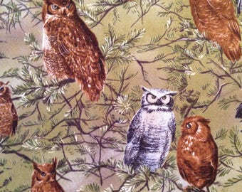 Wise Owls from Last Frontier