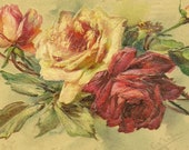 Pink and Red Rose Bouquet Botanical Artist Signed Antique Postcard Catherine Klein June Birth Flower