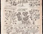 Antique Book Page / Plant Book / Antique Plants / Plant Book Page Sheet / Digital Instant Download / Antique Print / Old Book Page