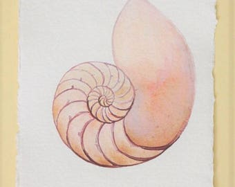 Chambered nautilus spiral shell cross section original watercolour painting illustration