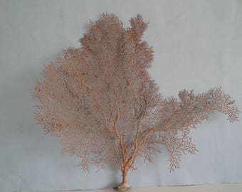 "14.2"" x 12"" Large Natural Red Color Sea Fan Seashells Reef Coral"