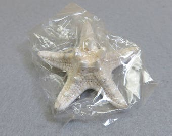 Vintage Real Starfish Hair Barrette, Clip On Starfish Hair Barrette