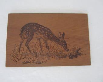 Postcard, Wood, Deer Fawn Exploring, California Redwood