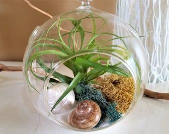 Air plant terrarium kit, DIY terrarium, glass terrarium, hanging glass orb, moss, air plants