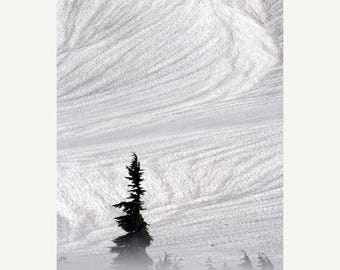 On Sale Winter, Tree, Subalpine Fir, North Cascades National Park, WA