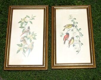 Large Vintage Framed Exotic Bird Prints - Set of 2 - Vintage Home Decor