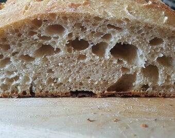 Arizona White Sonora Sourdough Bread Starter