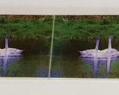 Swans Backsplash -  6  - 4.25in x 4.25in tiles  (25.5In x 4.25in)