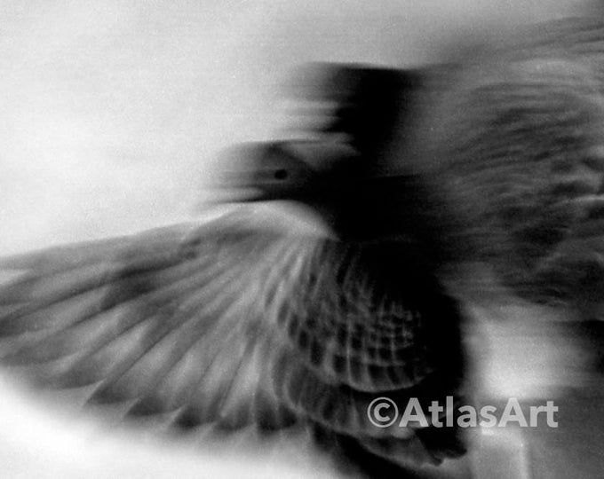 5 Postcards  'The Long Way Home', Set of  5, black and white, home decor, pigeon, art, photography
