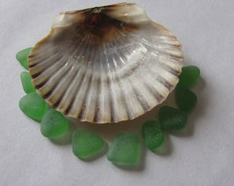 small emerald green kelly green genuine sea glass  beach glass