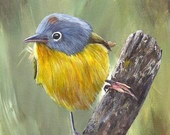 SALE Bird Art Painting Nashville Warbler SFA Wildlife Original hand painted bird acrylic painting by Australian Artist Janet M Graham