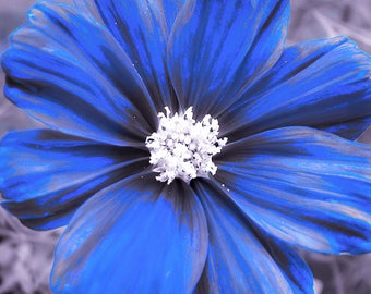 Flower Print, Flower Picture, Flower Photography, Flower Photos, Flower Art, Flower Petals, Blue Flowers, Flowers Print, Blue Flower Print