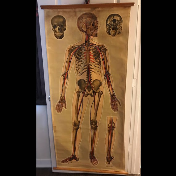 1930's Medical Print on Canvas