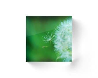 Green Acrylic Block, Dandelion Shelf Sitter, Mantle Art, Small Art, Acrylic Photo Block, Fine Art Nature Shelf Sitter, Green Home Decor