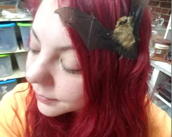 Taxidermy Bat Hair Comb// Barrett-Gothic-goth-fantasy-mystical-pagan-voodoo-witch