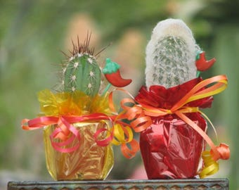 20 Decorated Cactus Mexican Fiesta in 2 inch pots