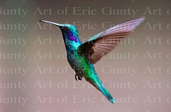 Hummingbird Birthday - Edible Cake and Cupcake Topper For Birthday's and Parties! - D22759