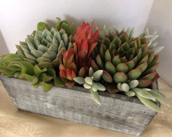 Large Succulent Arrangement in Whitewashed Wood Rectanglular Planter. Beautiful and elegant, completely assembled dish garden.