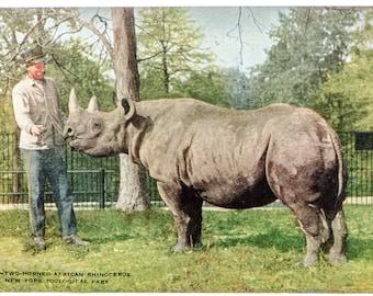 two-horn rhinoceros New York Zoological Park 1906 unused postcard