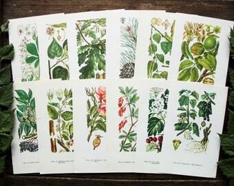 Trees Shrubs Medicinal Plants - Set of 12 Vintage Botanical Book Pages, 1970s. Drug Herbs Flower Illustration Scrap Collage Paper Ephemera